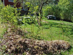 I Elisabeth Biströms trädgård