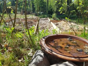 Odlingsbäddar i Elisabeth Biströms trädgård